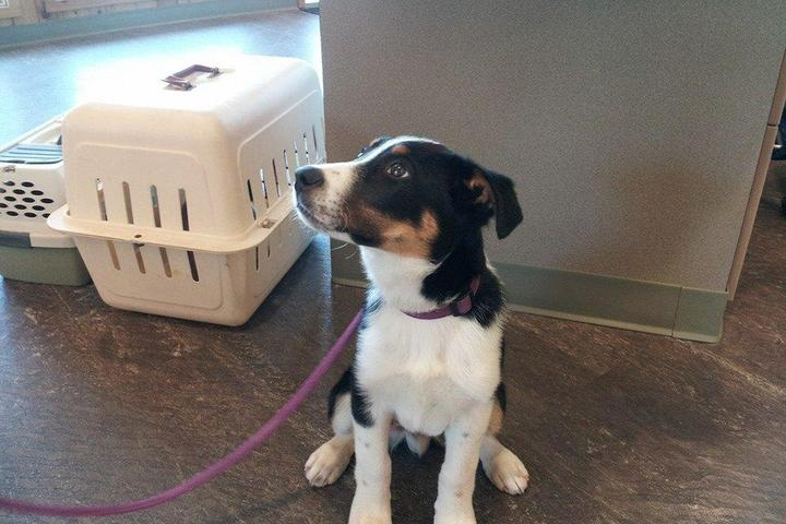 Pet Friendly Cole Park Veterinary Hospital