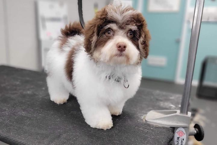 Pet Friendly Katie's Dog Grooming Services