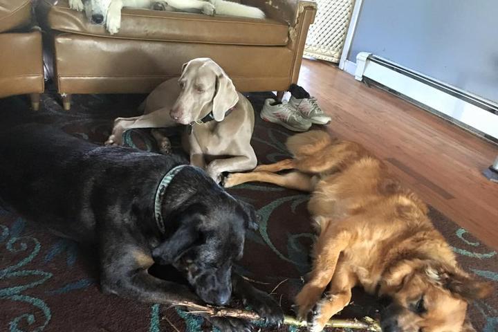 Pet Friendly Crate Escape Pet Care & Training