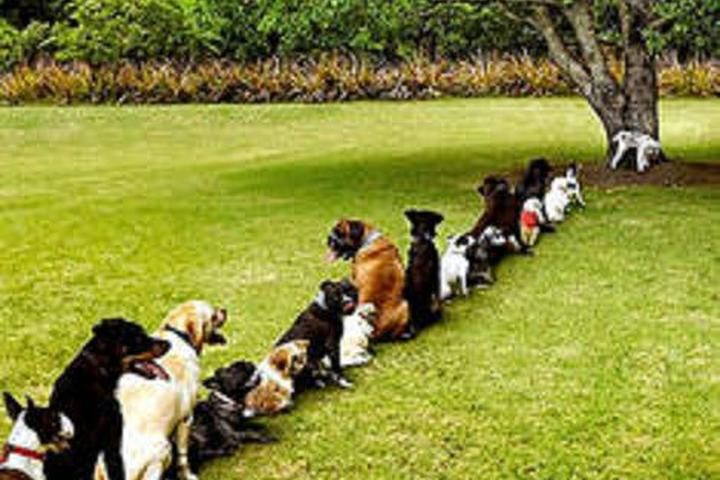 Pet Friendly Turf Scoop - Pet Waste Removal Service