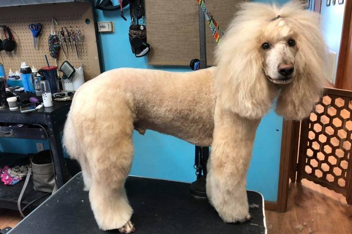 Pet Friendly Backcountry Dog Salon, LLC