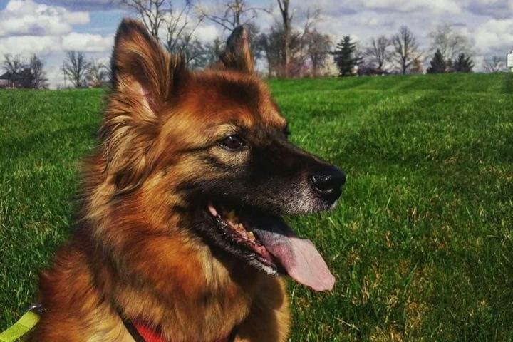 Pet Friendly Redleg Pet Services LLC