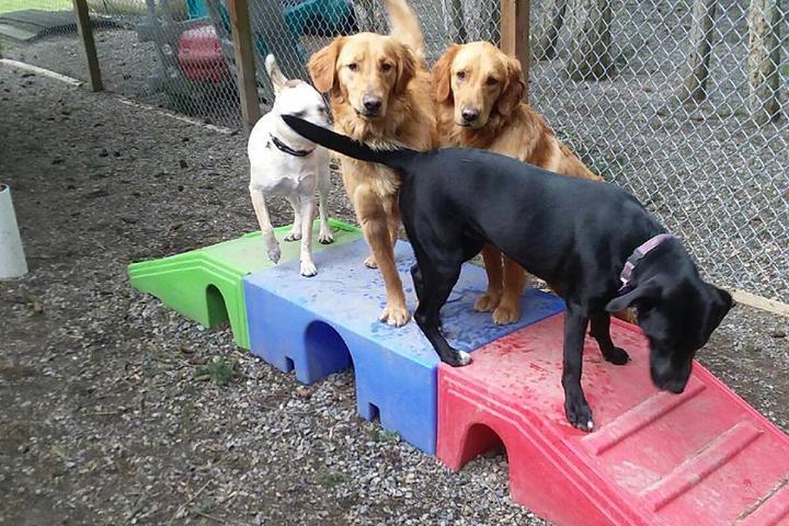 Pet Friendly Pet Ponderosa Resorts & Spa's