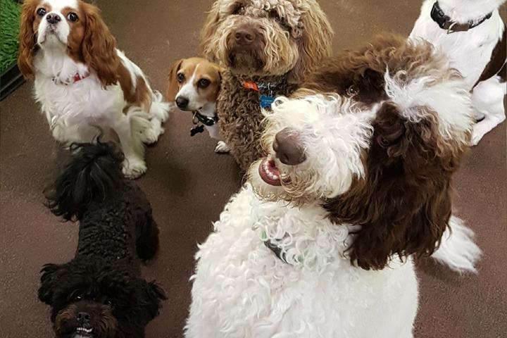 Pet Friendly Woofur Dog & Cat Services