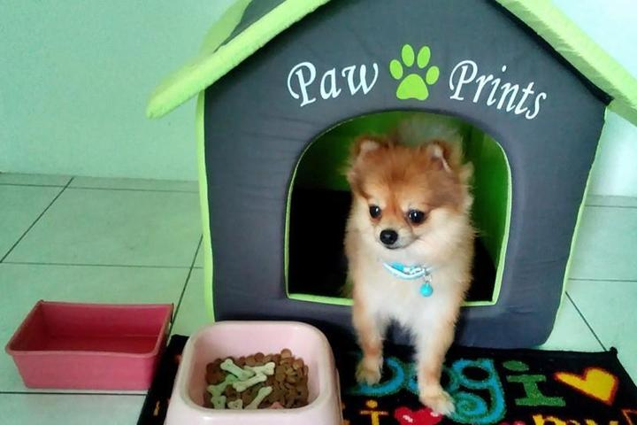 Pet Friendly My Pet Home Stay