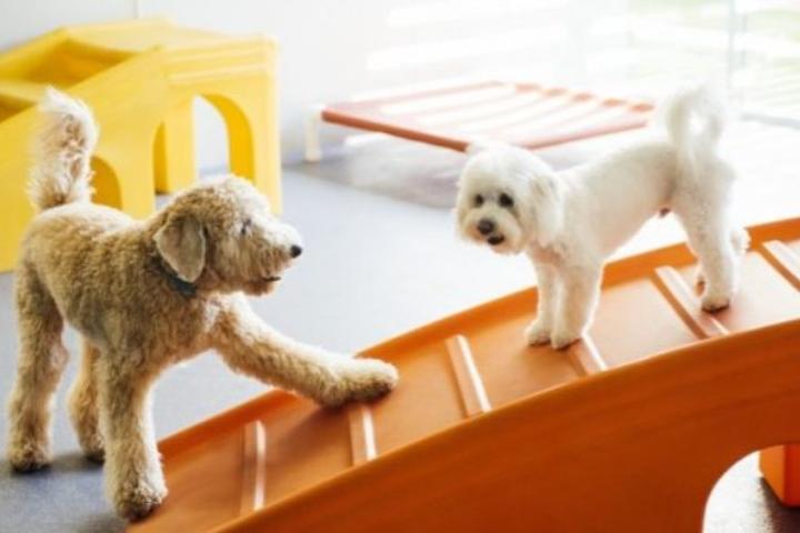 Pet Friendly Dogtopia of Union