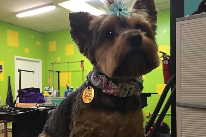 Pet Friendly A Beauty Chop For Dogs