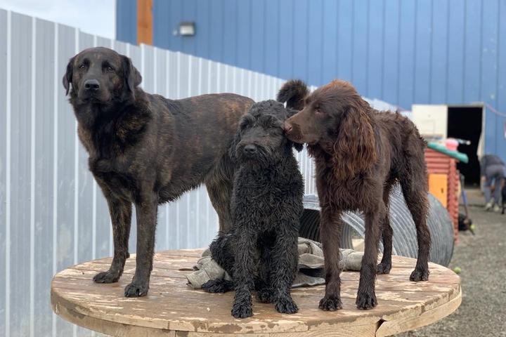 Pet Friendly Doggie Dog World