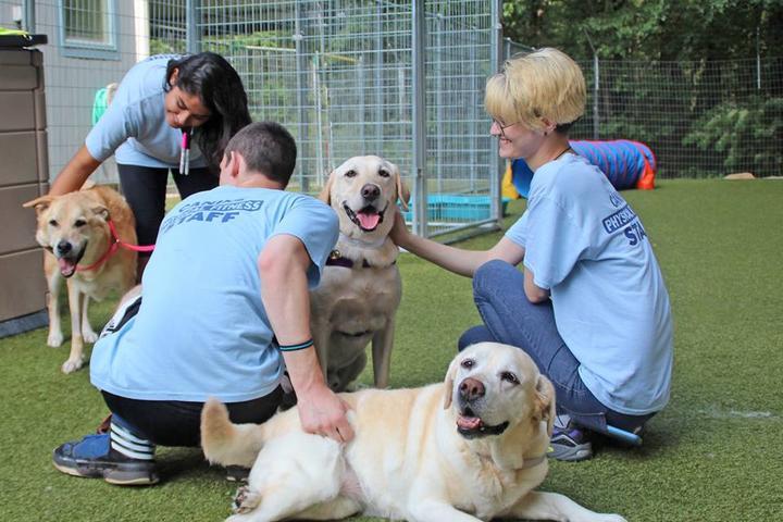 Pet Friendly Morris Animal Inn