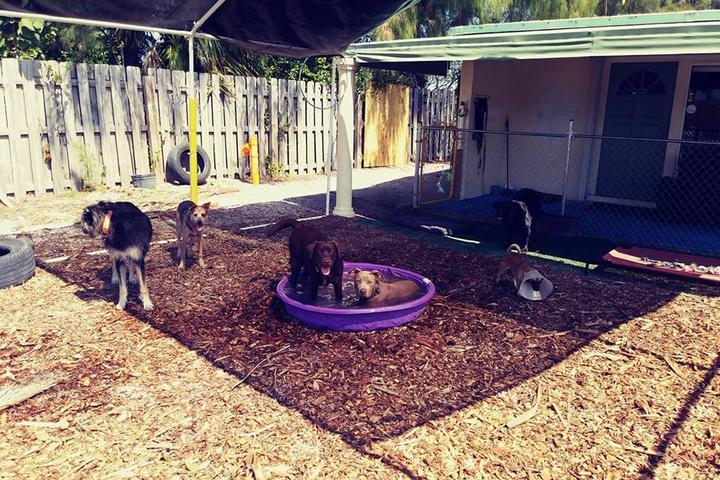Pet Friendly Dog Lab
