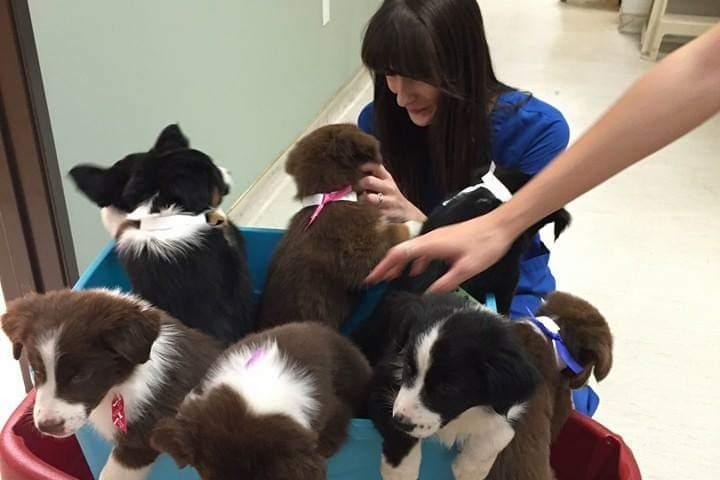 Pet Friendly Oyster Creek Animal Hospital
