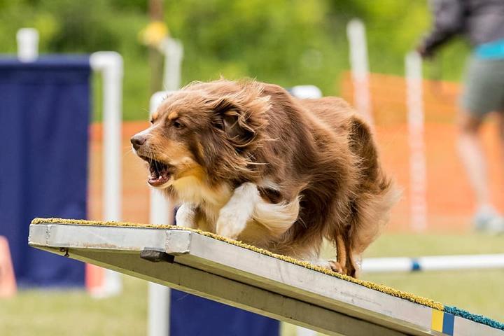 Pet Friendly Alyeska Canine Trainers
