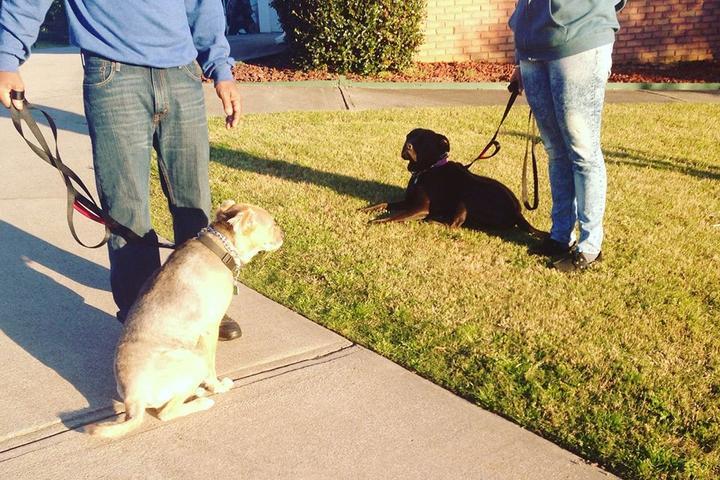 Pet Friendly Excelsior Dog Training