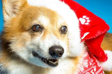 Pet Friendly Fur Photos