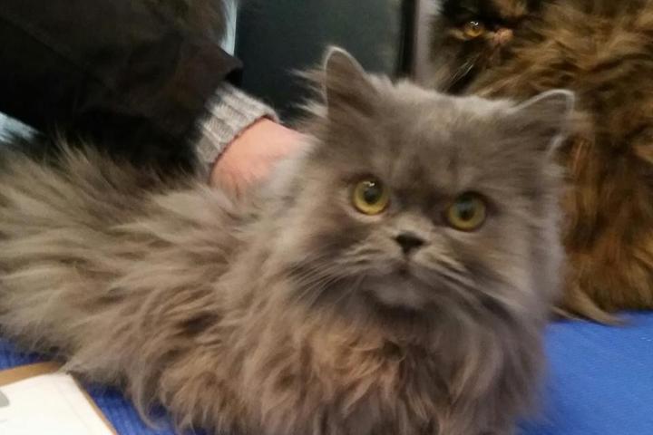 Pet Friendly La Maison des Chats