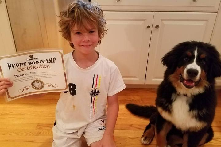Pet Friendly At Attention Dog Training, LLC