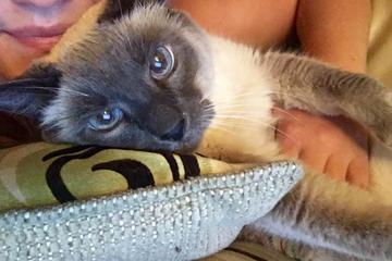 Pet Friendly Pawsitively Posh Pet Care Washington DC Pet Sitter