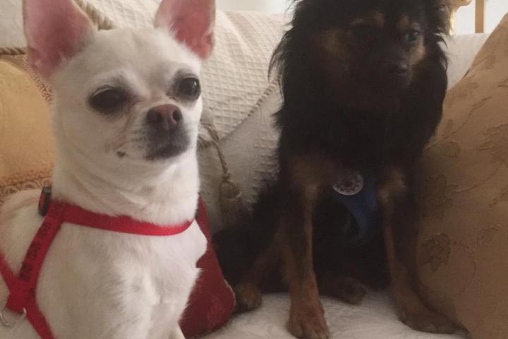 Pet Friendly Nana's Pet Home Care, LLC