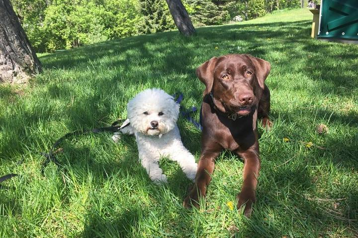 Pet Friendly Doggie Basics