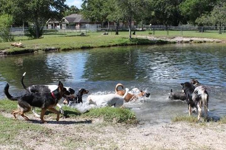 Pet Friendly Paradise Luxury Dog Resort