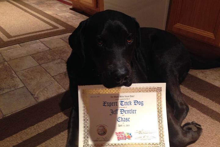 Pet Friendly Dentler's Dog Training, LLC