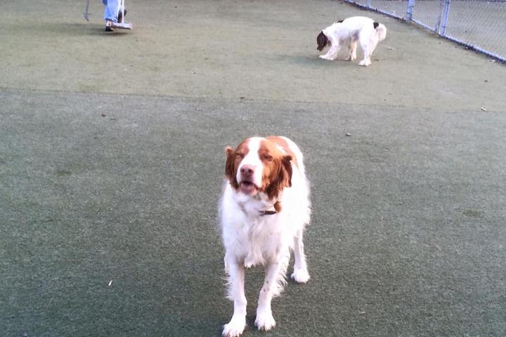 Pet Friendly Green Level Kennel