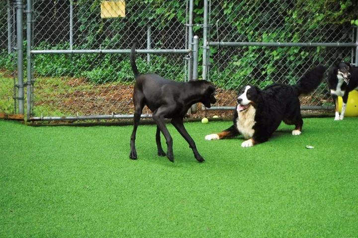 Pet Friendly Town & Country Animal Care Center
