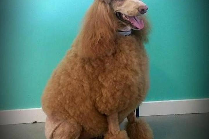 Pet Friendly Pawsitively Perfect Grooming