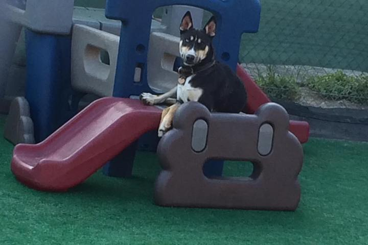 Pet Friendly South Park Doggie Daycare and Boarding LAX