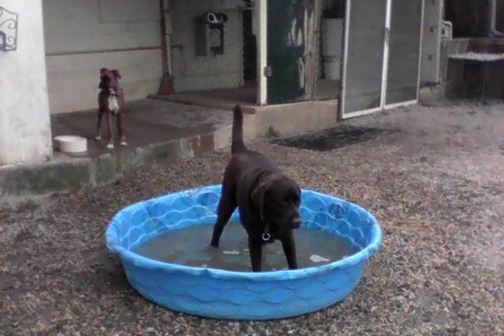 Pet Friendly Club Dogz