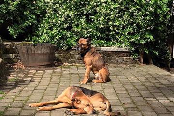 Pet Friendly Blue Door Veterinary Services