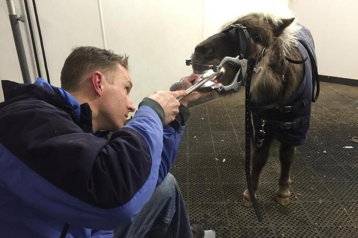 Pet Friendly Lavender Equine Rehabilitation & Vet Services