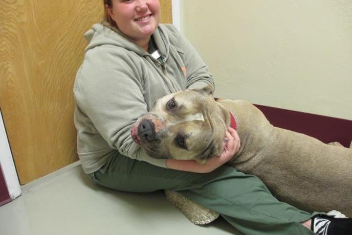 Pet Friendly Cambria Veterinary Clinic