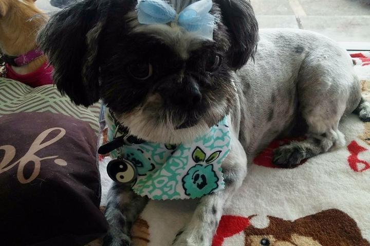 Pet Friendly Paw Envy Pet Care