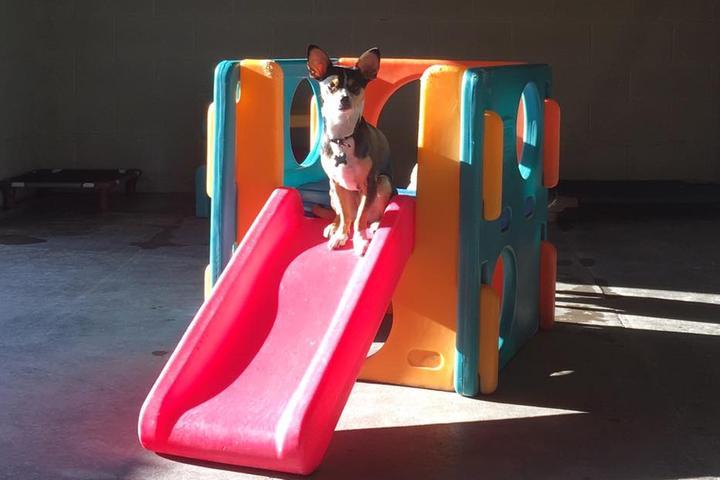 Pet Friendly Dog Town