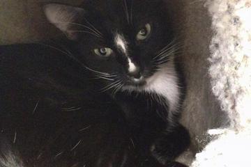 Pet Friendly Tampabay Cat Alliance