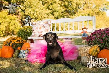 Pet Friendly Jenna Regan Photography
