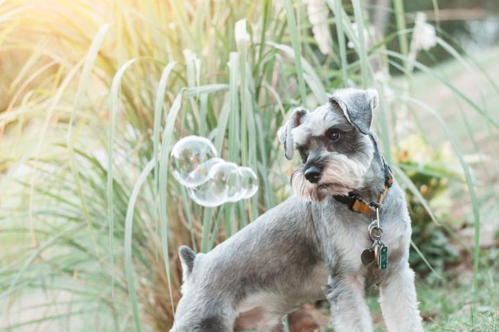Pet Friendly Bark & Gold Photography