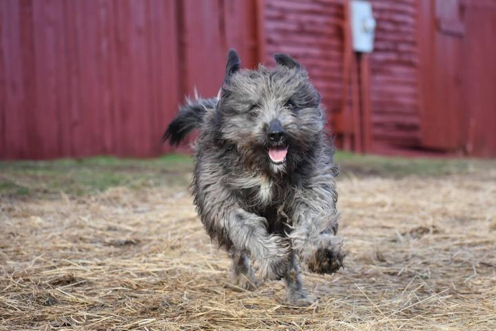 Pet Friendly Country Club Kennels and Training