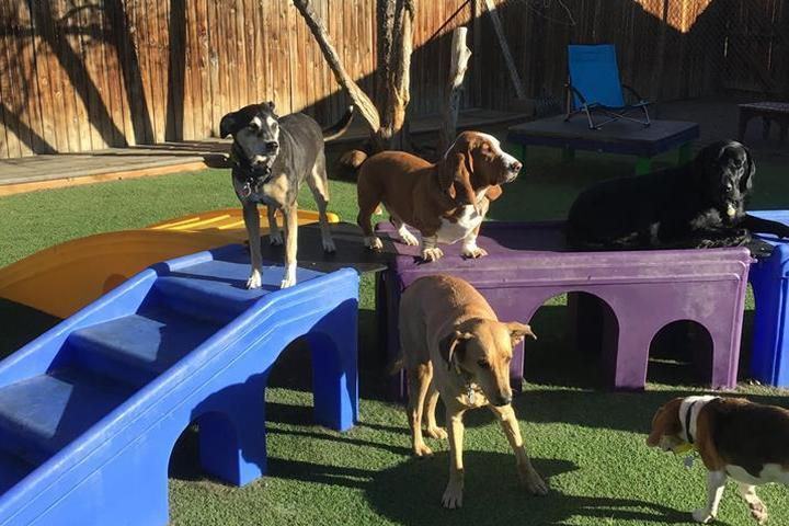 Pet Friendly Beds-N-Biscuits
