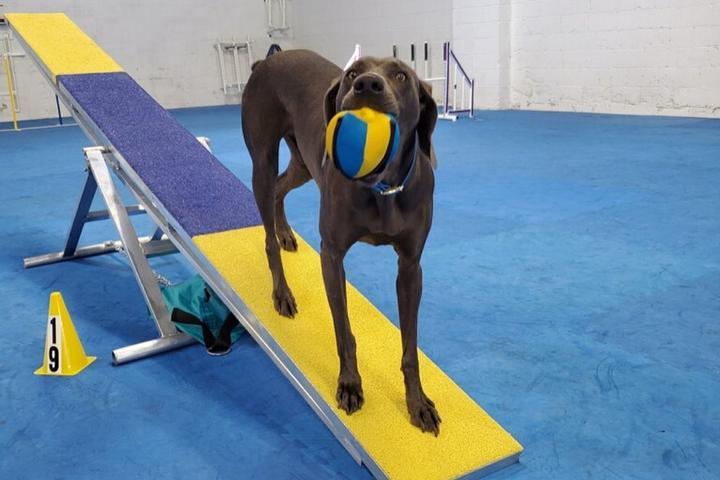 Pet Friendly Canine Sports & Activity Center