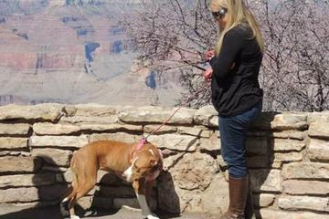 Pet Friendly Grand Canyon Kennel South Rim