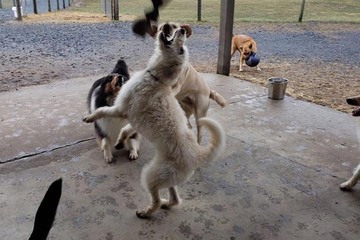 Pet Friendly 3 Dog Farm