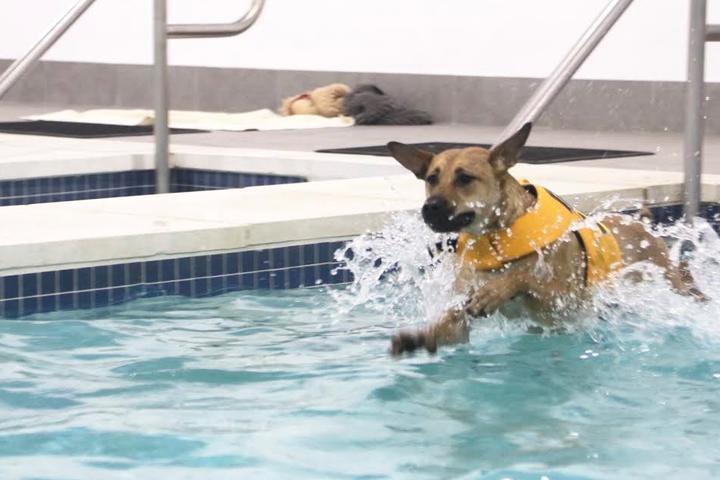 Pet Friendly K9 Aquatic Center