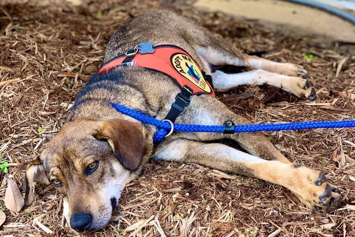 Pet Friendly Community Animal Rescue & Adoption