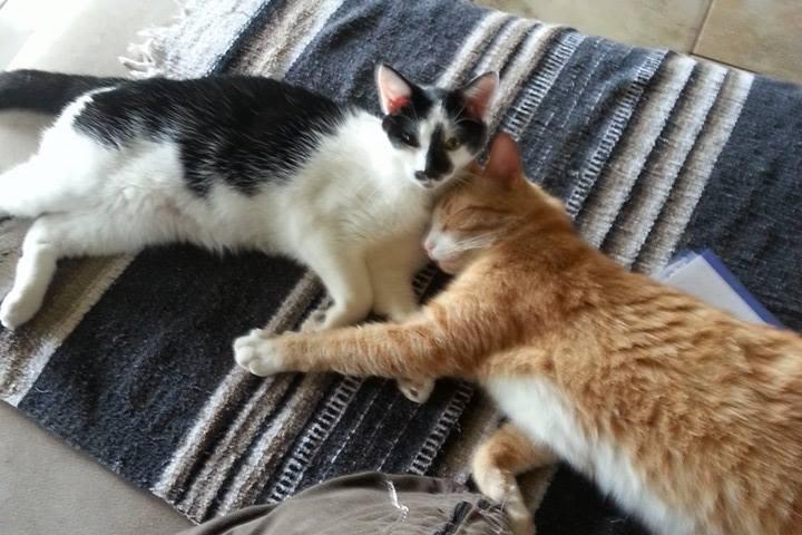 Pet Friendly Furever Friends