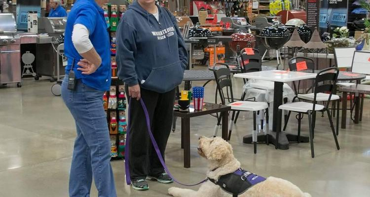 Wags Wiggles Dog Training
