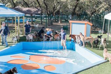Pet Friendly Lucy's Doggy Daycare and Spa
