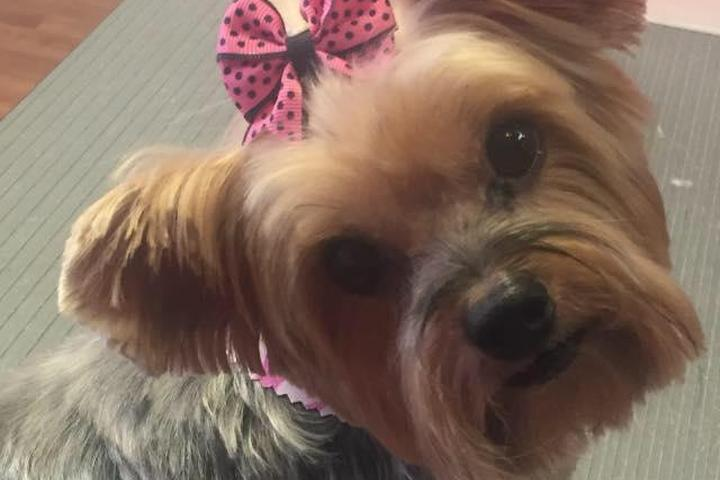 Pet Friendly Pampered Pooches