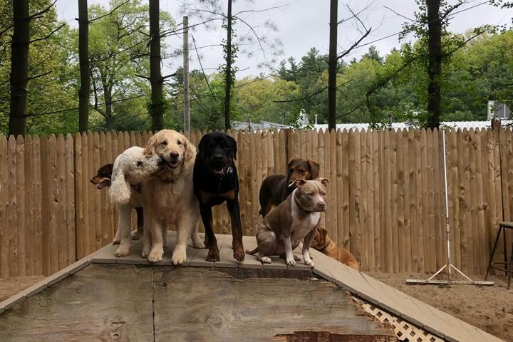 Pet Friendly Free Range Doggy Daycare